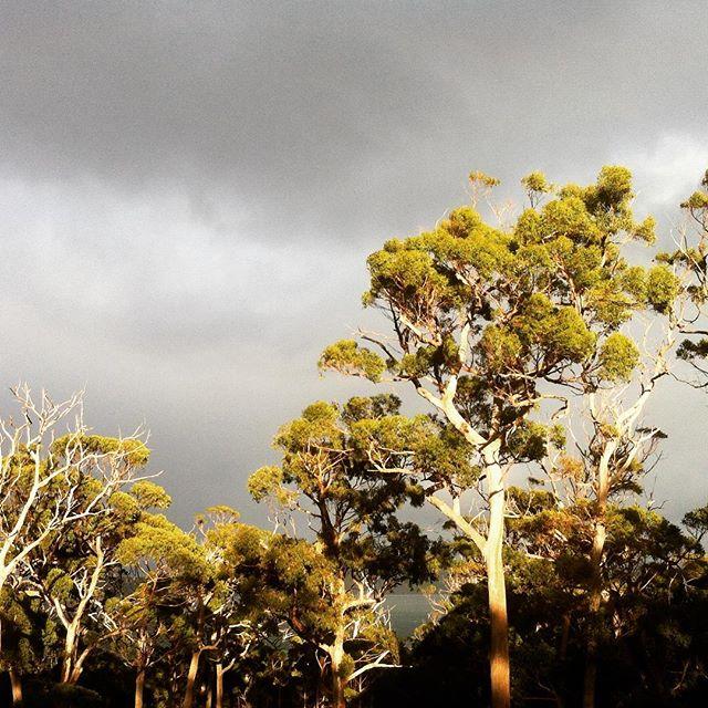 Wedgetail Weather...#birds #wind #tasmania #see #nature #landscape #clouds #australia #tailoredtasmania
