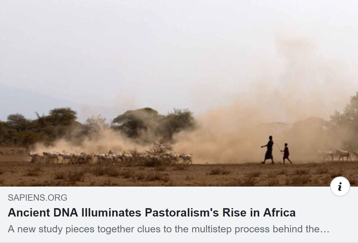 Sapiens Org Ancient DNA Illuminates Pastoralism's Rise in Africa banner.JPG
