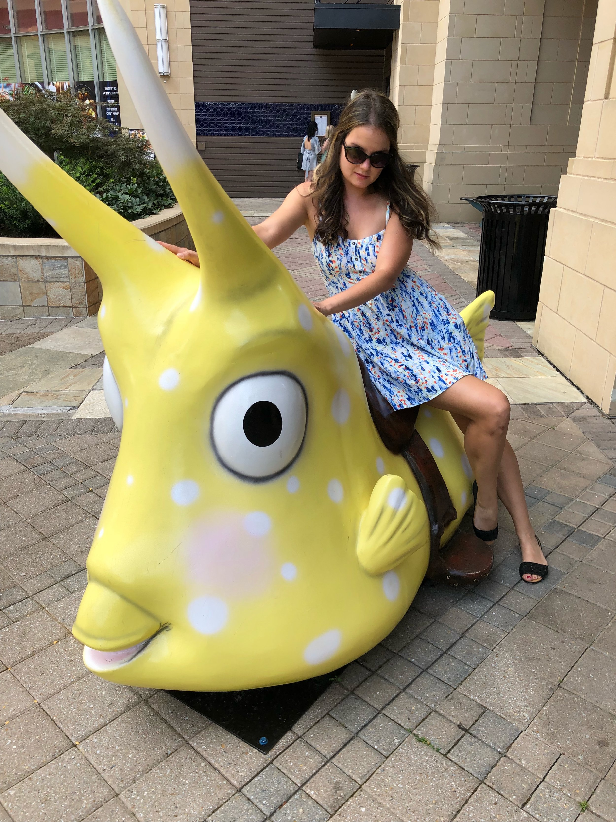 Bulla is right next to Cowfish. And this giant cowfish!