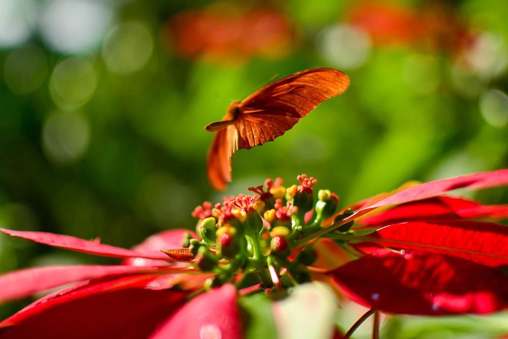 Matthew+Henry+Butterflies+at+Belcour.jpg