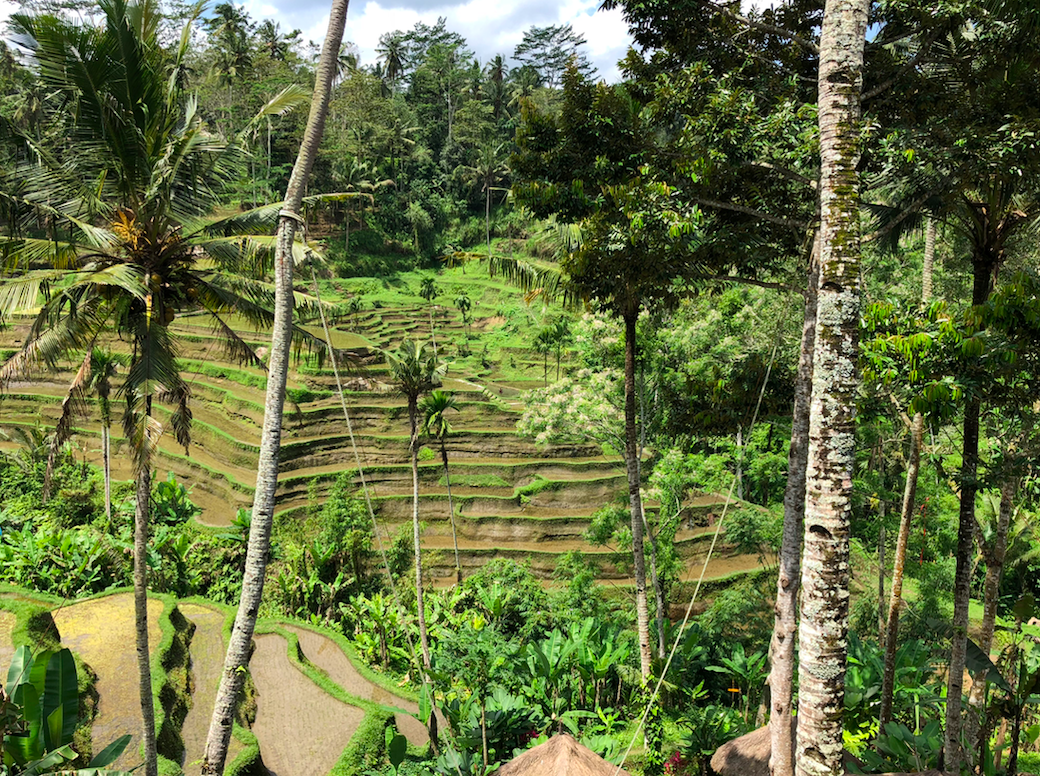 Fitness Tips From Bali - Maintaining Fitness and Igniting Creativity