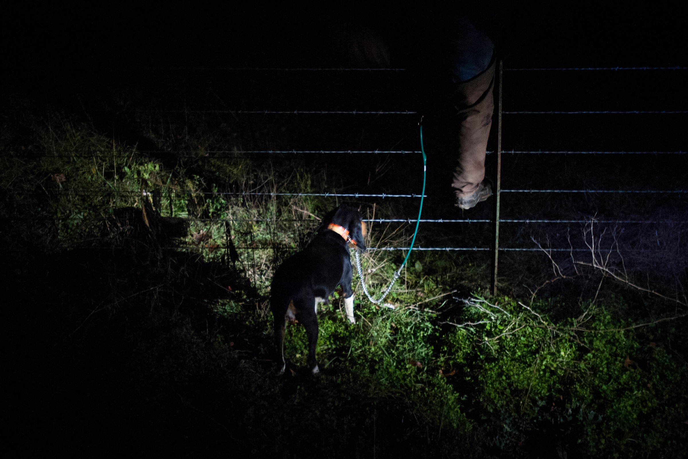 Man-made road blocks like barbed wire often impede hunters but pose little resistance for dogs who will track a scent for miles through fields, forests, and over rivers.