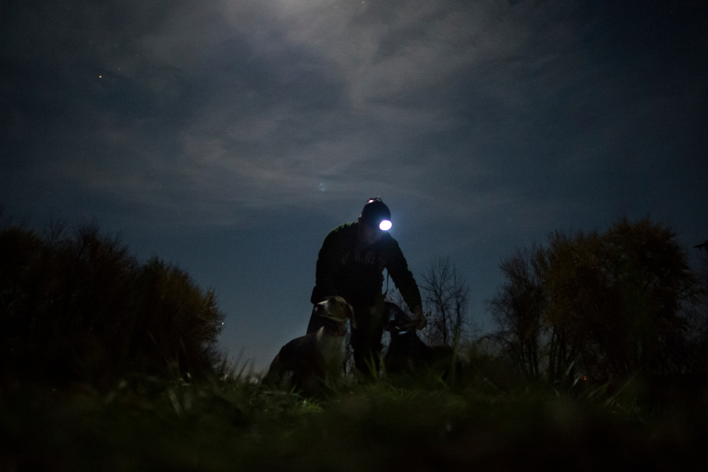 Josh Hoffman prepares to release two dogs under the high full moon in late November, 2014.