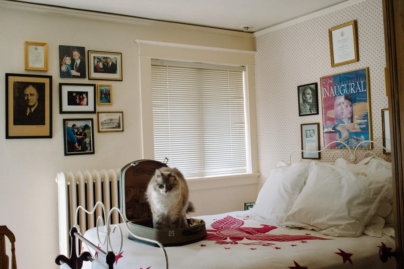 Ghost, the Ankenbrand family's cat stretches after napping in their Democrat-themed guest room of their house in a more historic neighborhood in Ferguson.