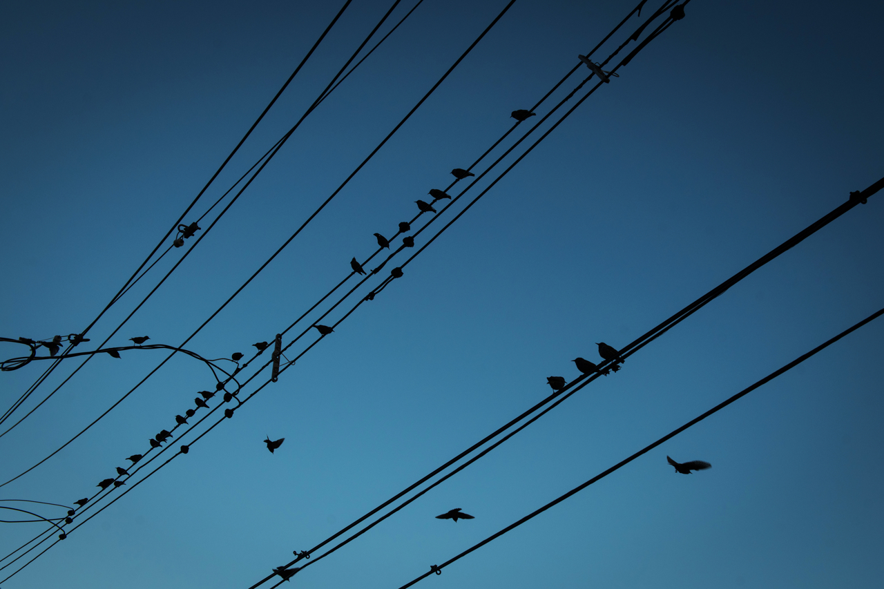 Birds sit on a wire in the Ocean Breeze neighborhood, Staten Island, NY. Ocean Breeze, like all the neighborhoods along the southeast shore of Staten Island, sits in a floodplain and was devastated by Hurricane Sandy.