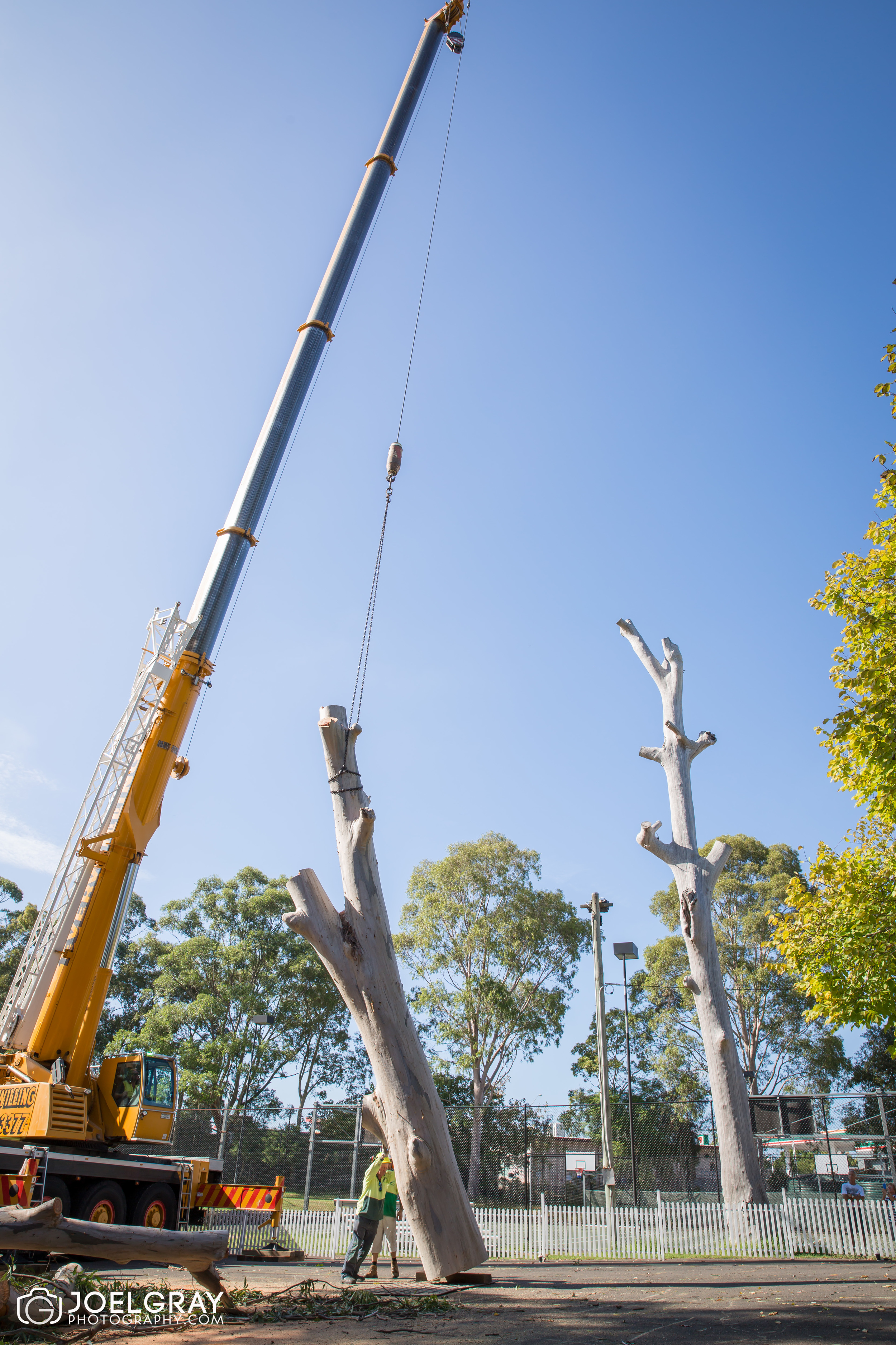 tree removal by crane sydney