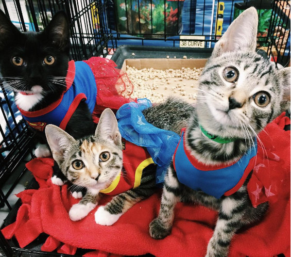 CW IG kittens dressed up.png