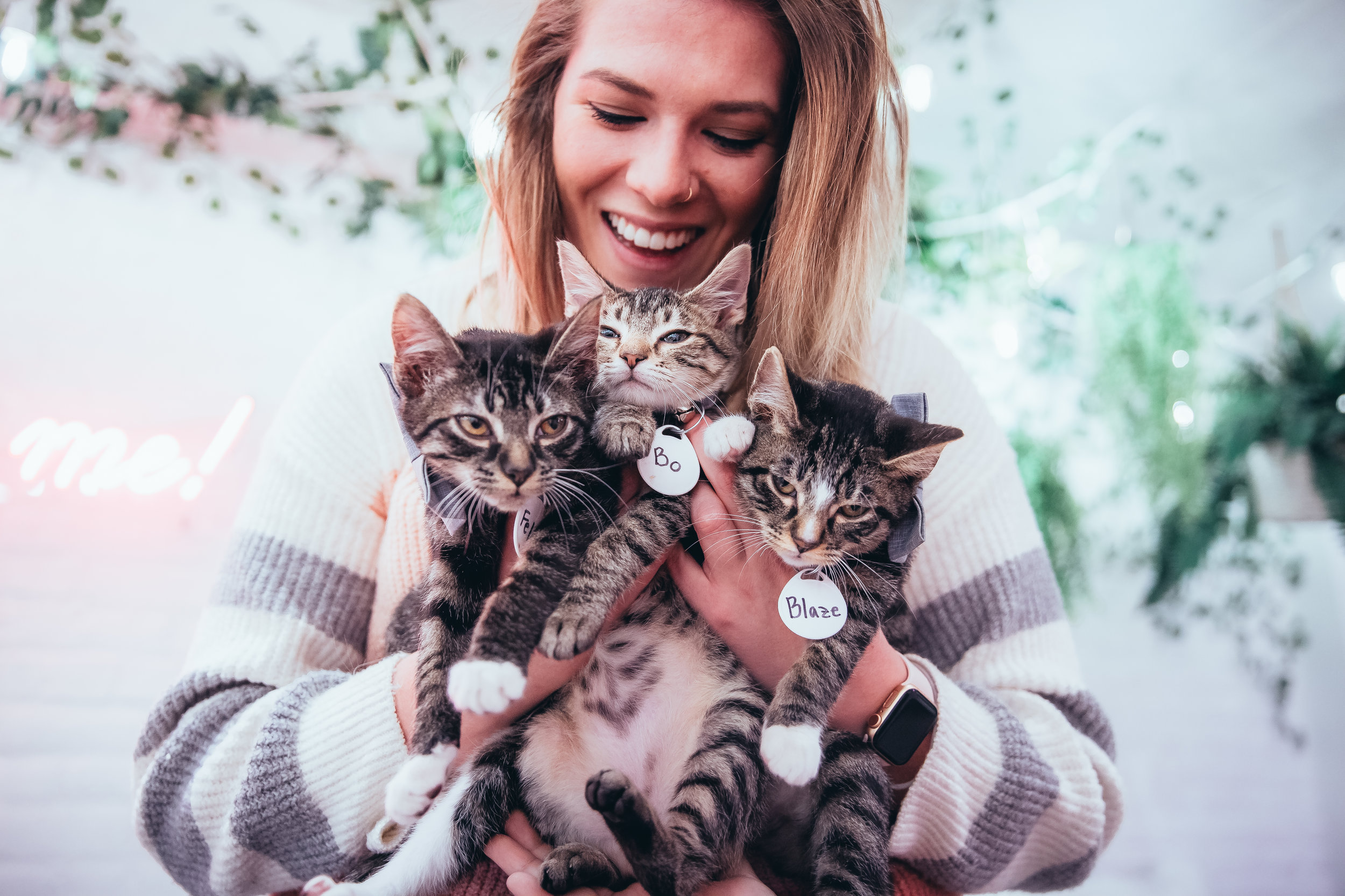 So, what is The Kitten Cafe? - The Kitten Cafe is a place filled with adorable rescue kittens who are looking for their forever homes. You can play with them, cuddle with them, nap with them, do a photoshoot with them, and if you fall in love...adopt them!