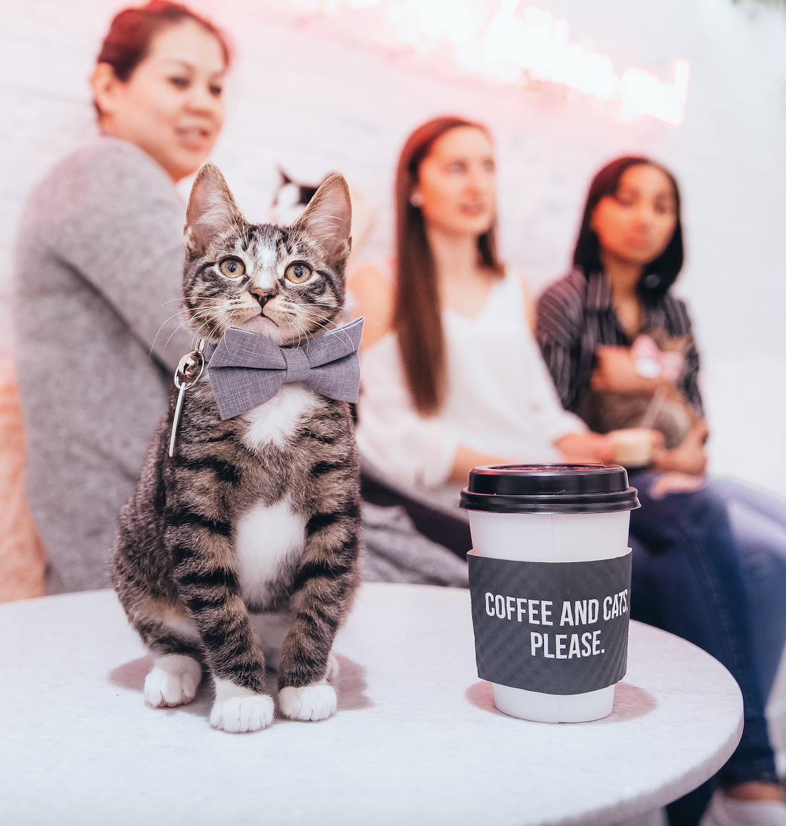 What is The Kitten Lounge? - The Kitten Lounge is a place filled with adorable rescue kittens who are looking for their forever homes. You can play with them, cuddle with them, nap with them, do a photoshoot with them, and if you fall in love, adopt them!