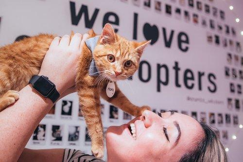 Crumbs & Whiskers | Cat Cafe & Kitten Lounge — Kitten Lounge