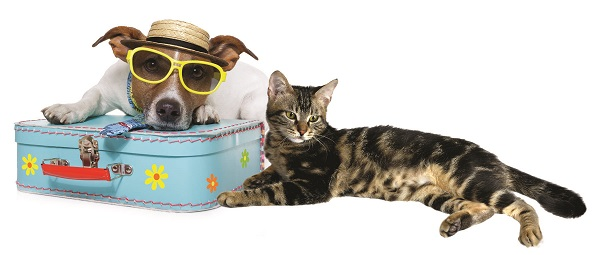 Pet Sitters Help With Summer Travels