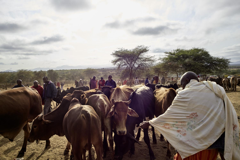 Inequalities_Kenya_Agricutlure-Development-Masai-farming_2016-07-21_Kenya_0031.jpg