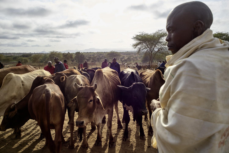 Inequalities_Kenya_Agricutlure-Development-Masai-farming_2016-07-21_Kenya_0044.jpg
