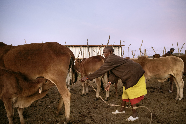Inequalities_Kenya_Agricutlure-Development-Masai-farming_2016-07-21_Kenya_0049.jpg