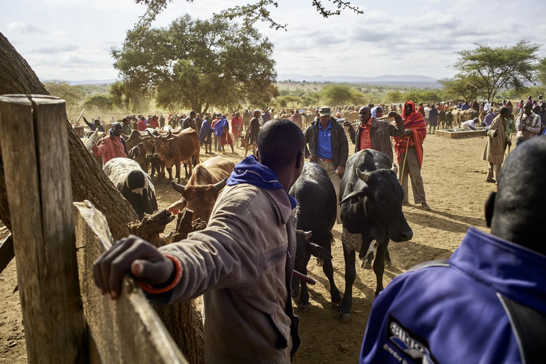Inequalities_Kenya_Agricutlure-Development-Masai-farming_2016-07-21_Kenya_0190.jpg