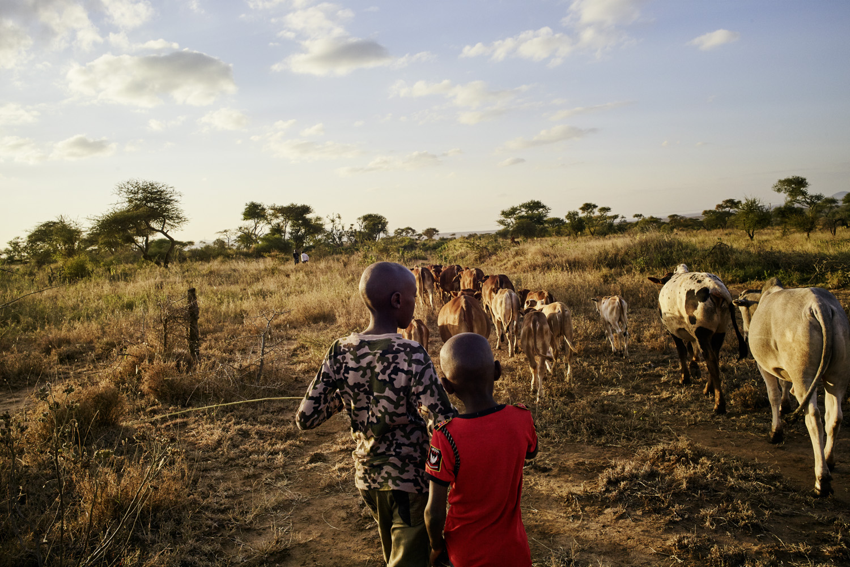 Inequalities_Kenya_Agricutlure-Development-Masai-farming_2016-07-21_Kenya_0593.jpg