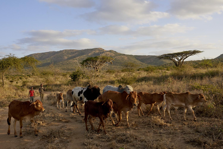 Inequalities_Kenya_Agricutlure-Development-Masai-farming_2016-07-21_Kenya_0661.jpg