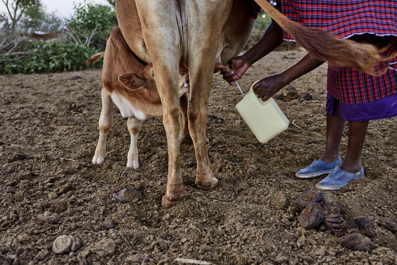 Inequalities_Kenya_Agricutlure-Development-Masai-farming_2016-07-21_Kenya_0800.jpg