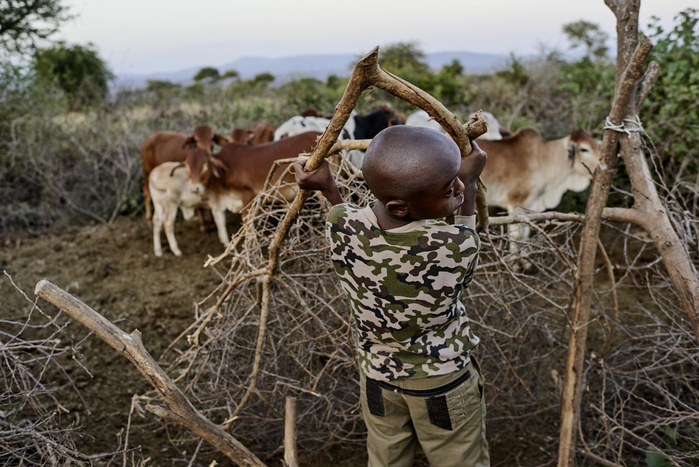 Inequalities_Kenya_Agricutlure-Development-Masai-farming_2016-07-21_Kenya_0817.jpg