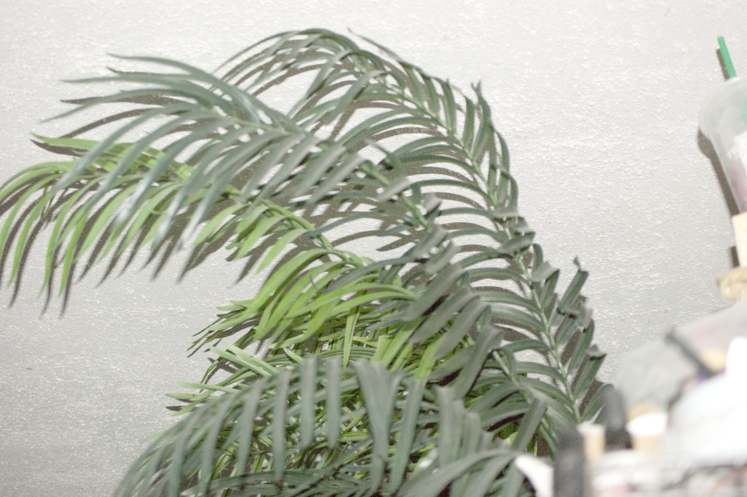 studio pics 081318 (washed out fronds).png