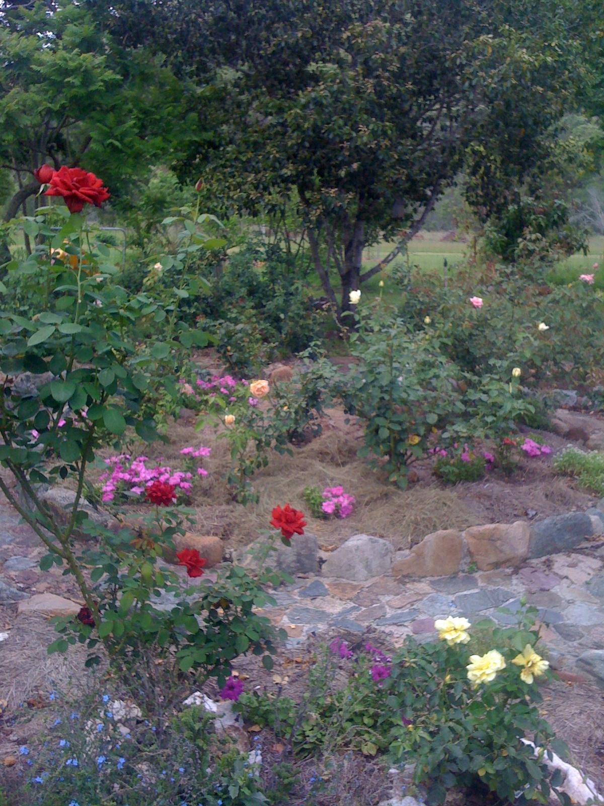 mum and dads rose garden 006.JPG