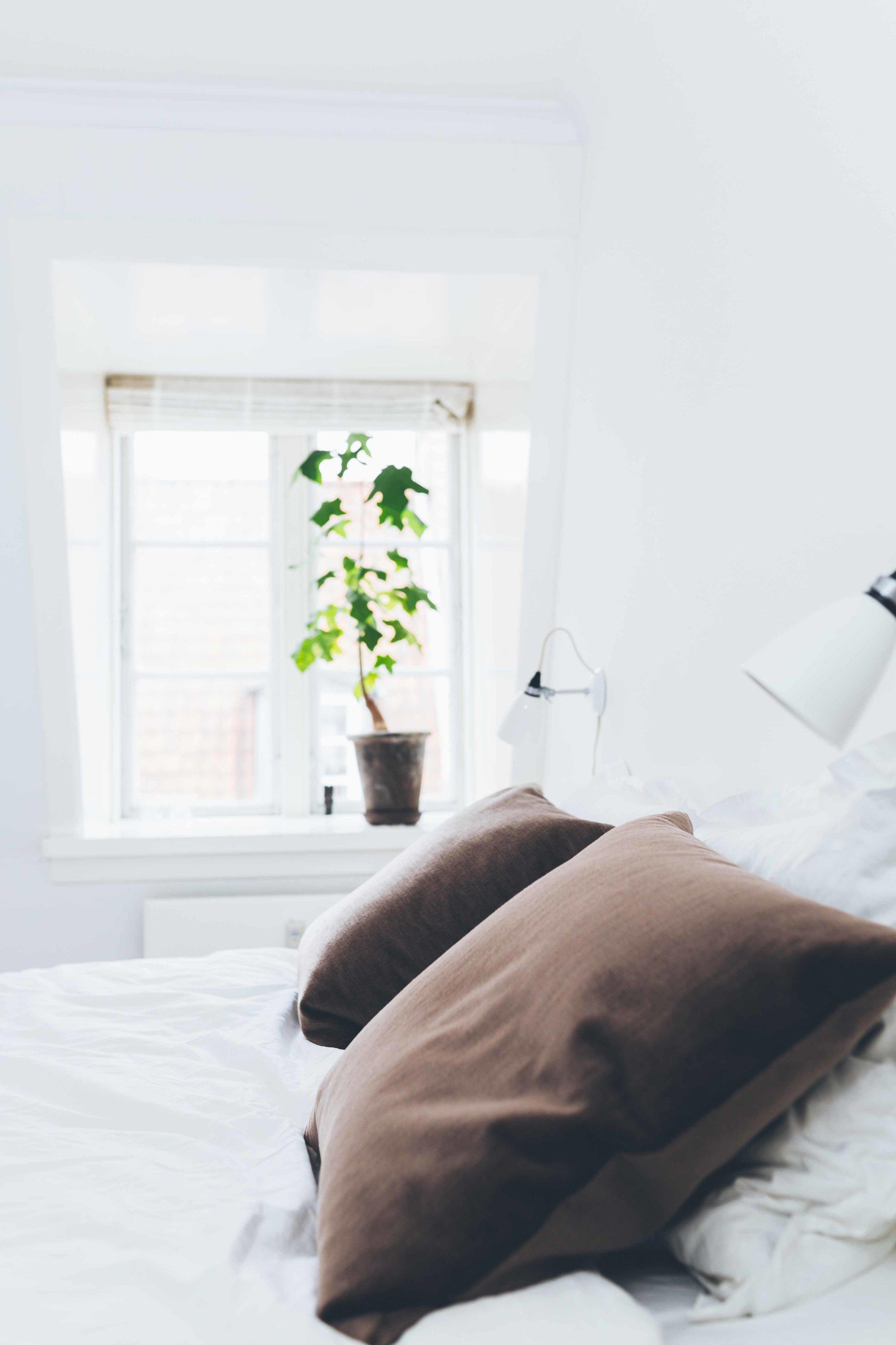 sove2.jpg