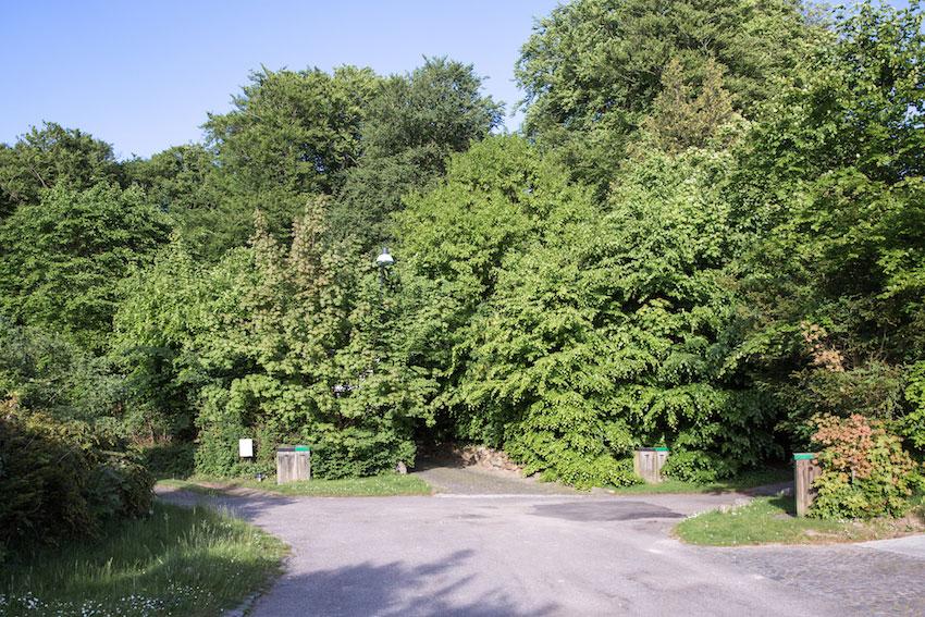 Stokkevad-Maimouselle-078.jpg