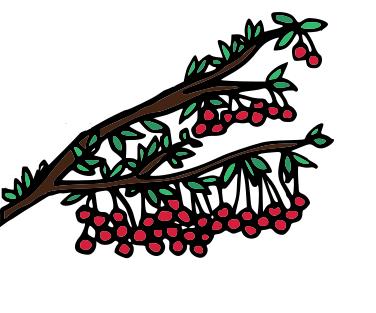 kirsch tree