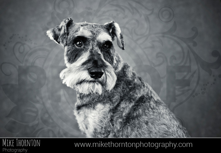 dog and pet photography Cambridge