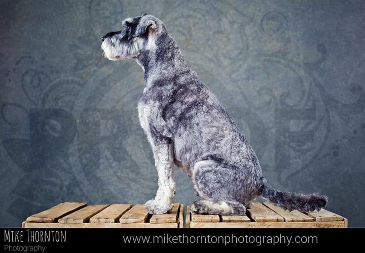 pet and dog photography cambridge