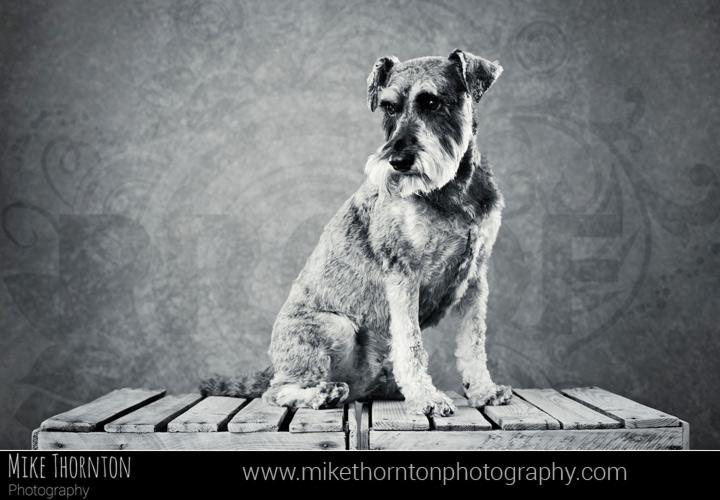 dog photographer Cambridge
