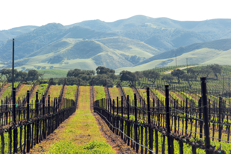 airstream rental san diego wine country.jpg