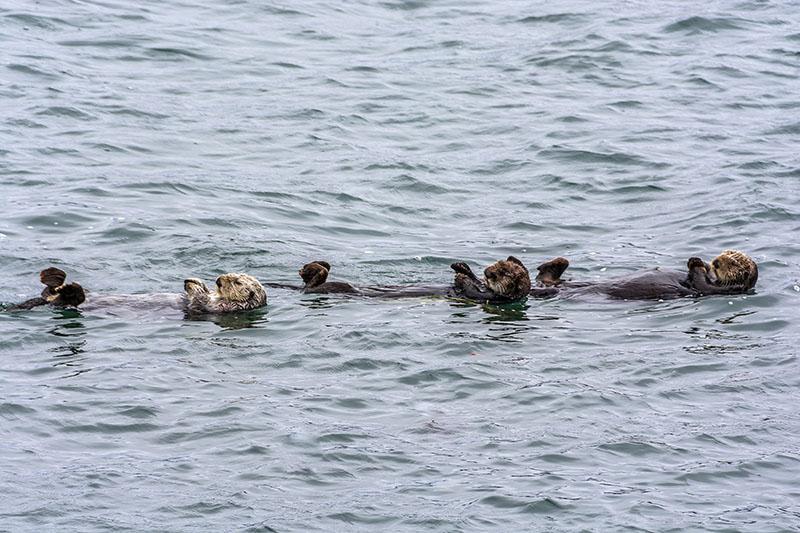 airstream rental san diego monterey otters.jpg