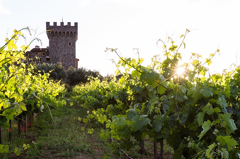 airstream rental san diego calistoga winery.jpg