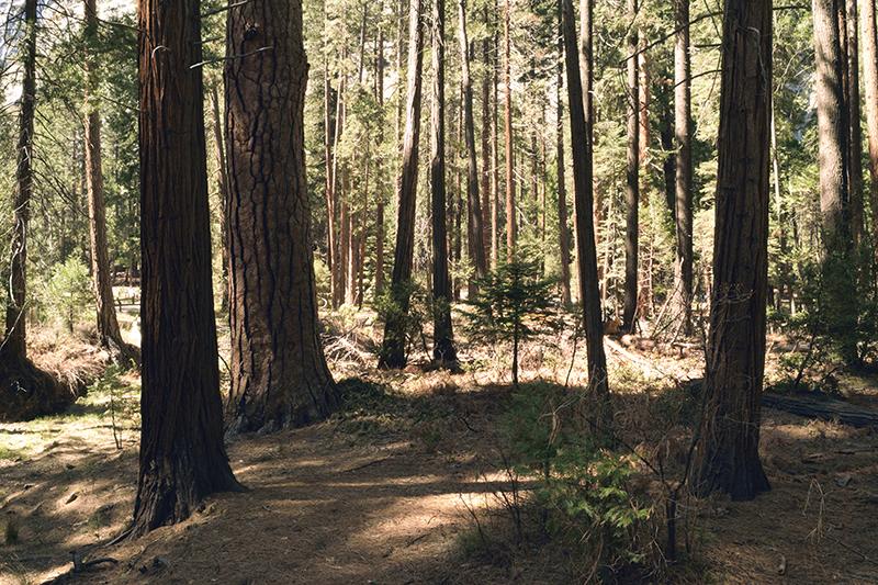airstream rental san diego yosemite sequoia.jpg