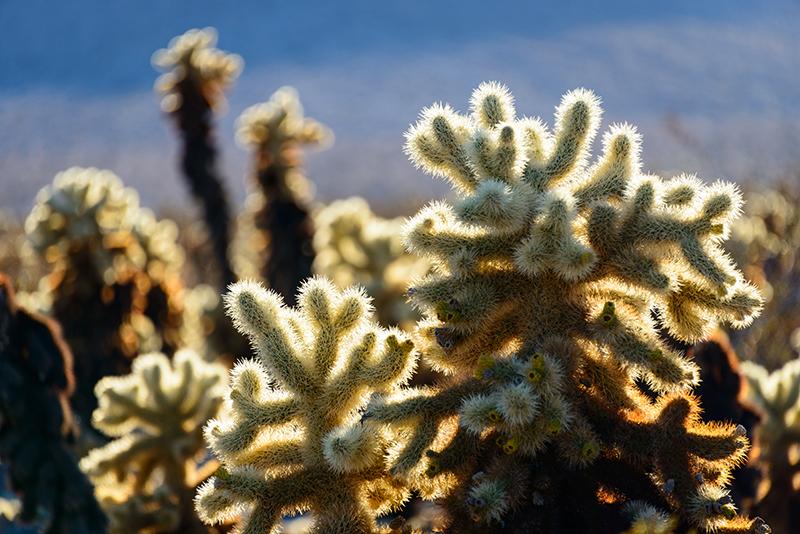 airstream rental san diego cactus garden joshua tree.jpg