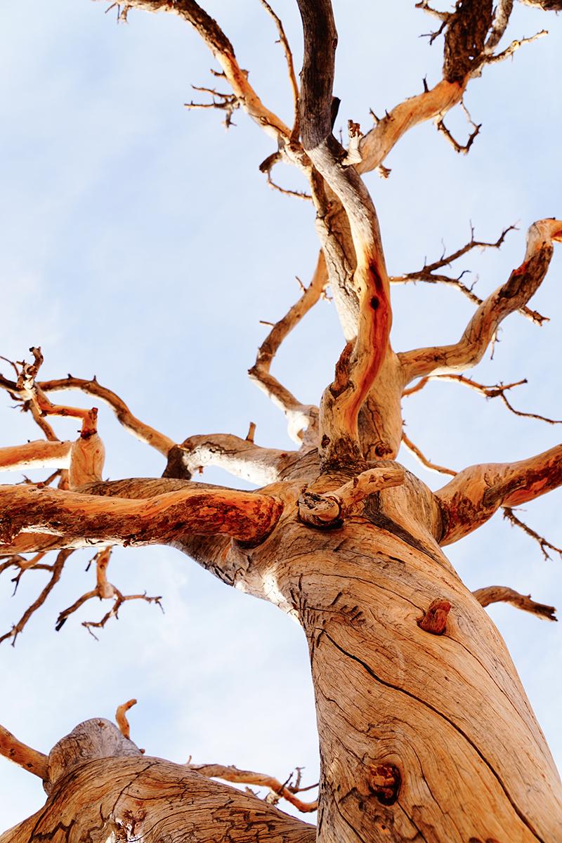 airstream rental san diego joshua tree np.jpg