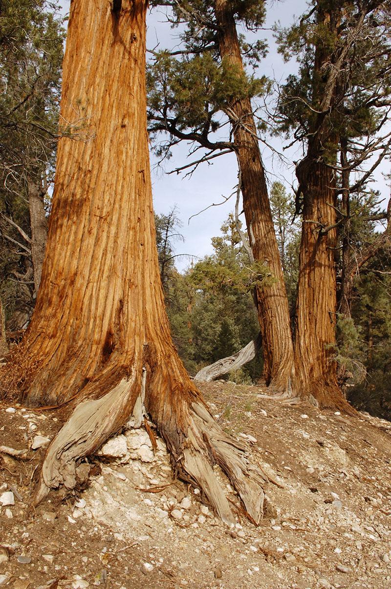 airstream rental san diego big bear pine.jpg