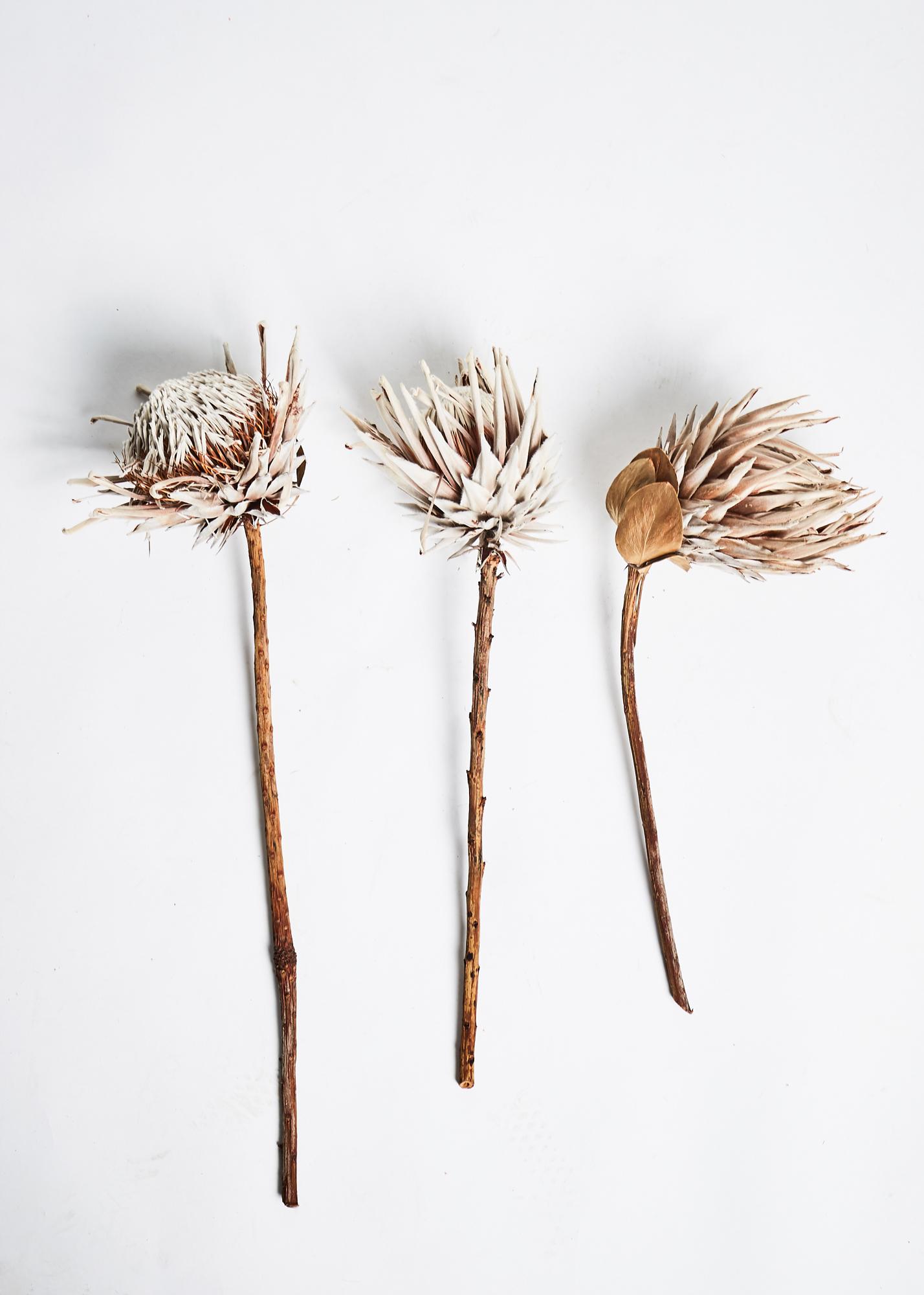 jefflevingston-product-flowers.jpg