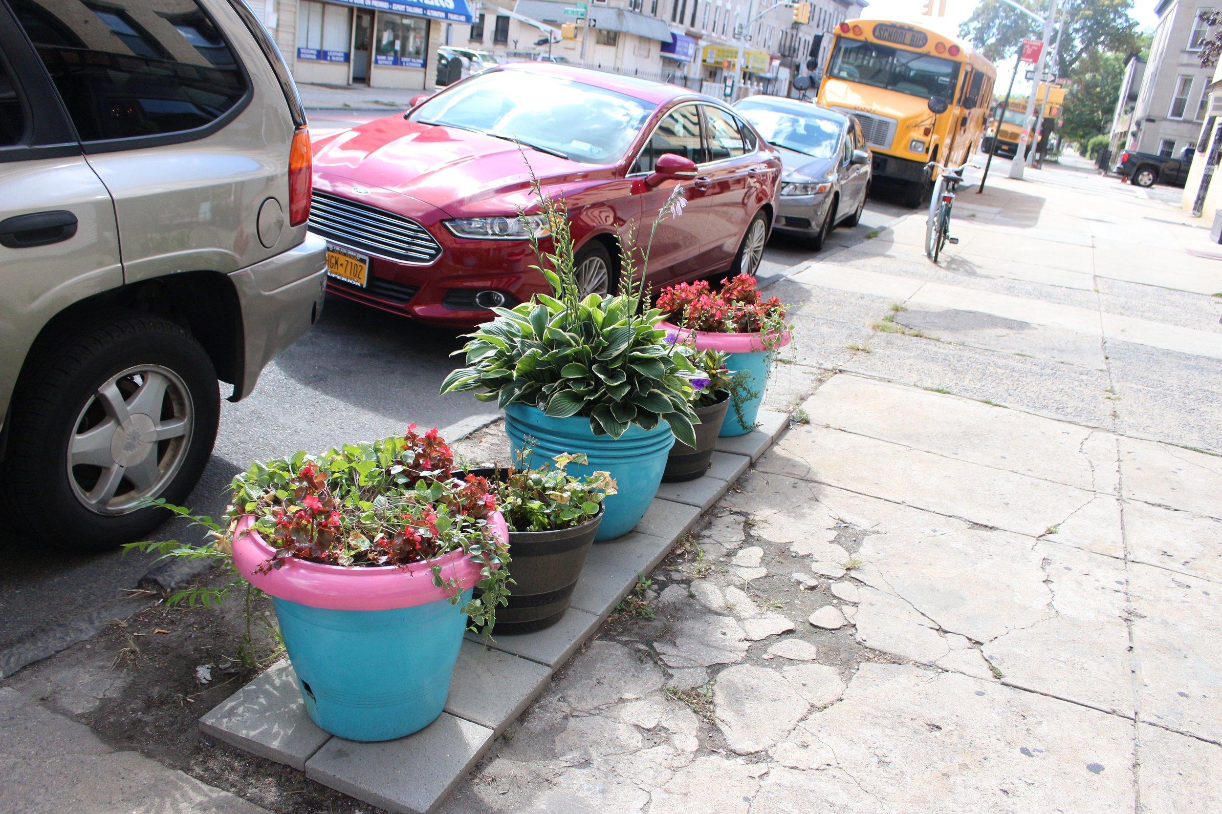 jasmine diane travels to brooklyn, new york
