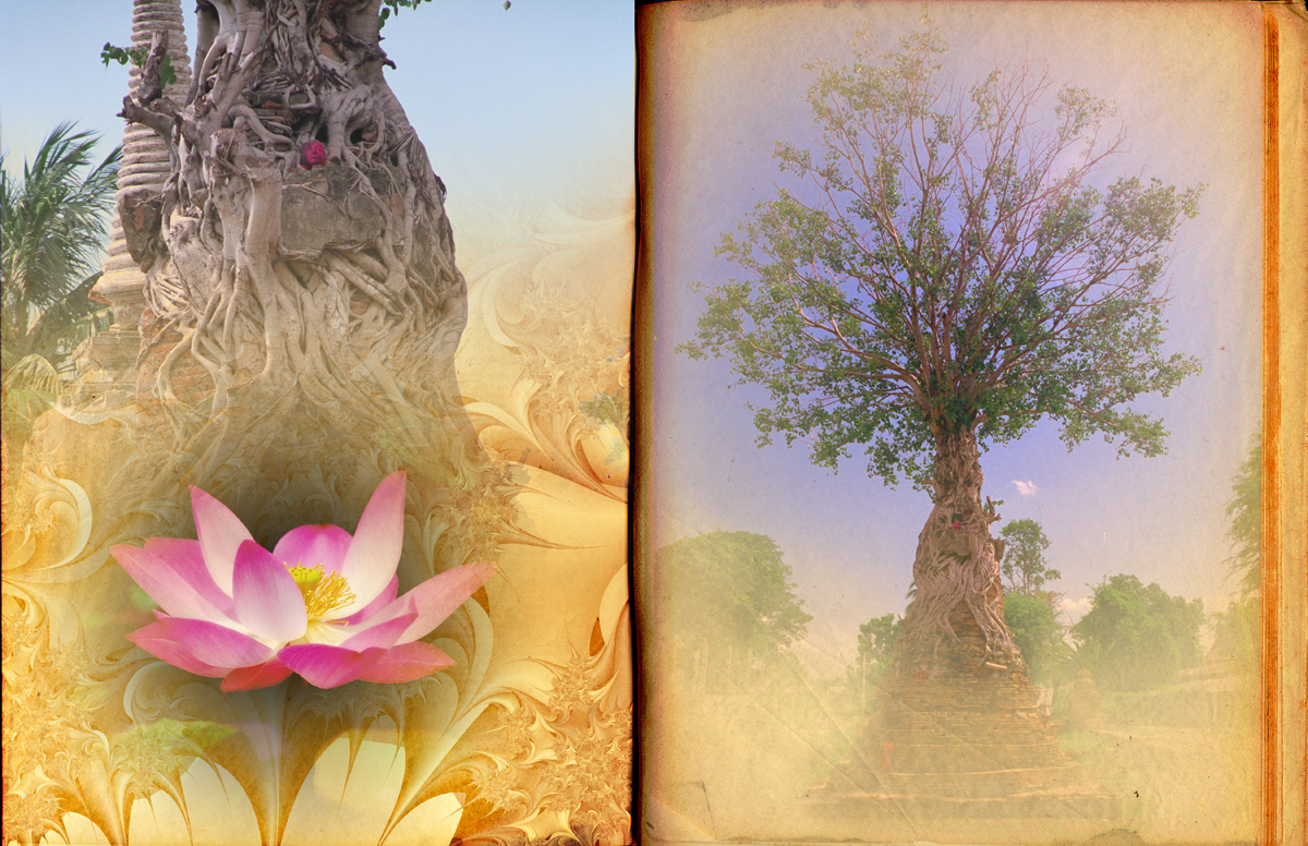 Page Thai tree temple root.jpg