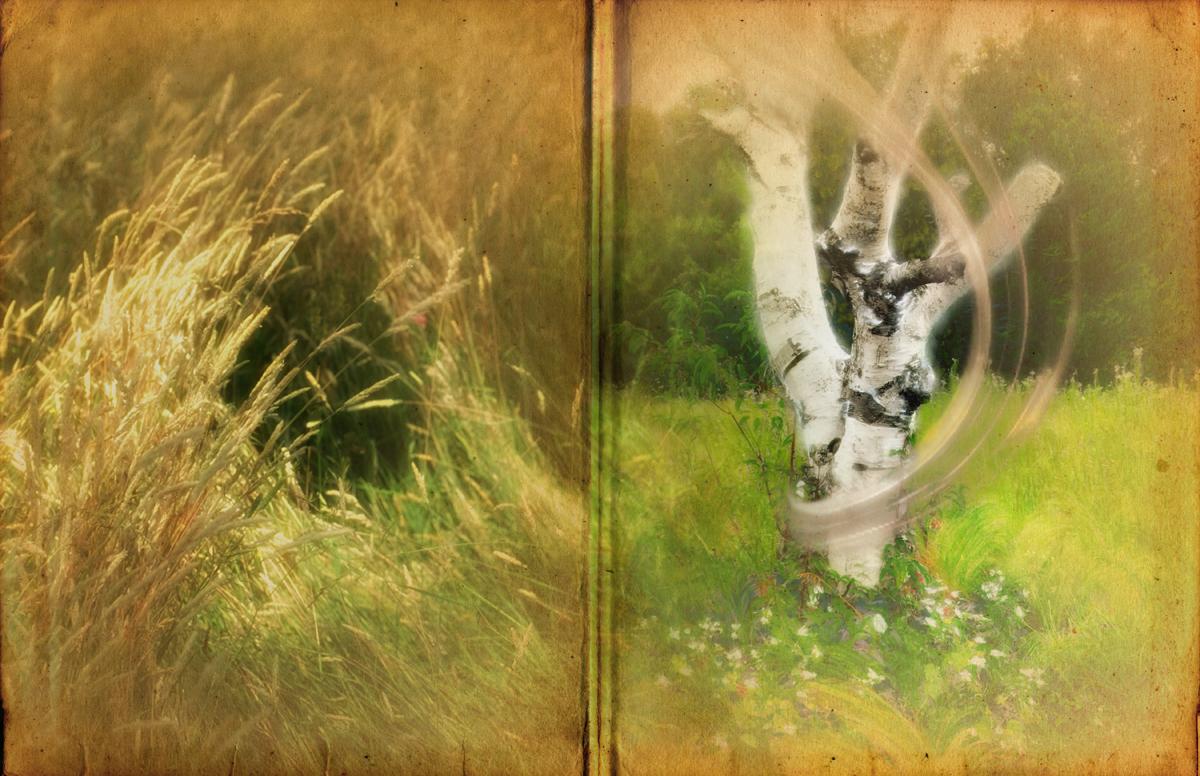 Page white tree.jpg