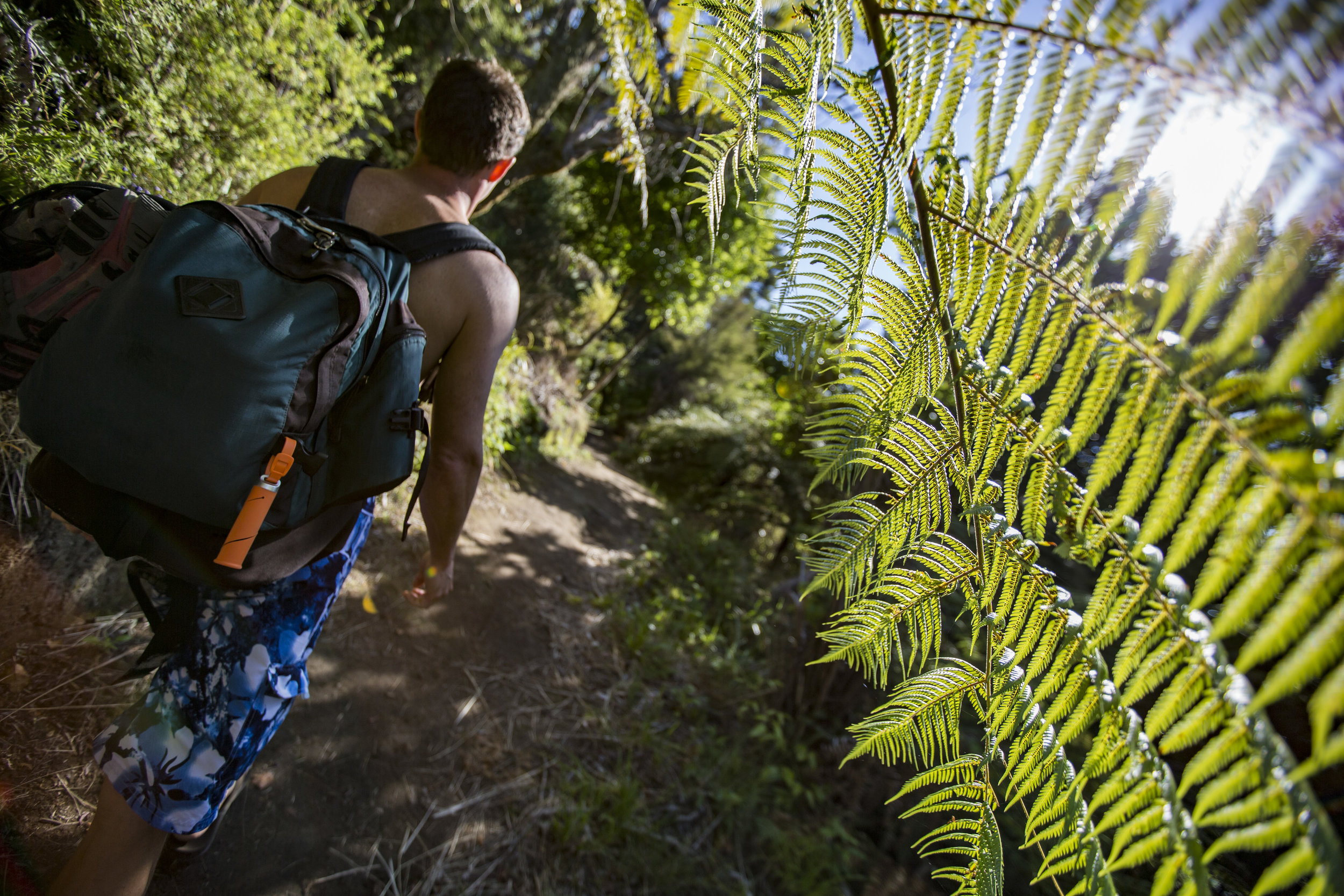 New Zealand Abel Tasman National Park Forest Traveller Hiking - 0W3A1822 Lg RGB.jpg