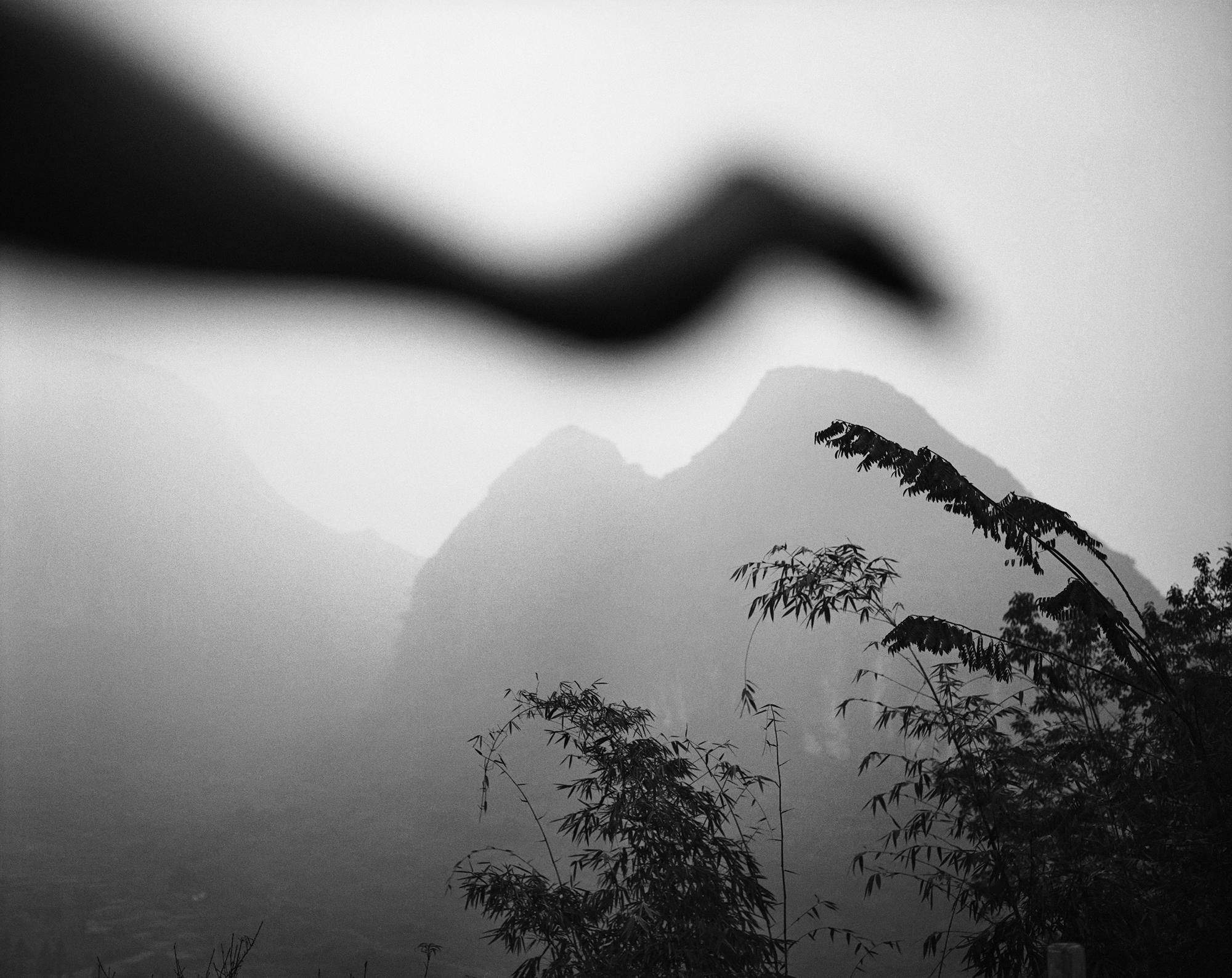 Arno Rafael MInkkinen - Bird of Lianzhou, Lianzhou, China