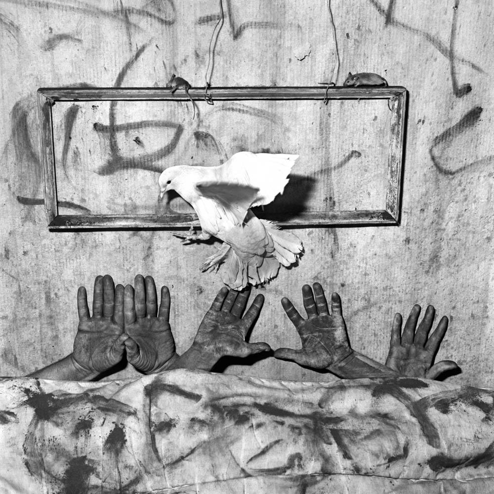 Roger Ballen - Five Hands - 2006