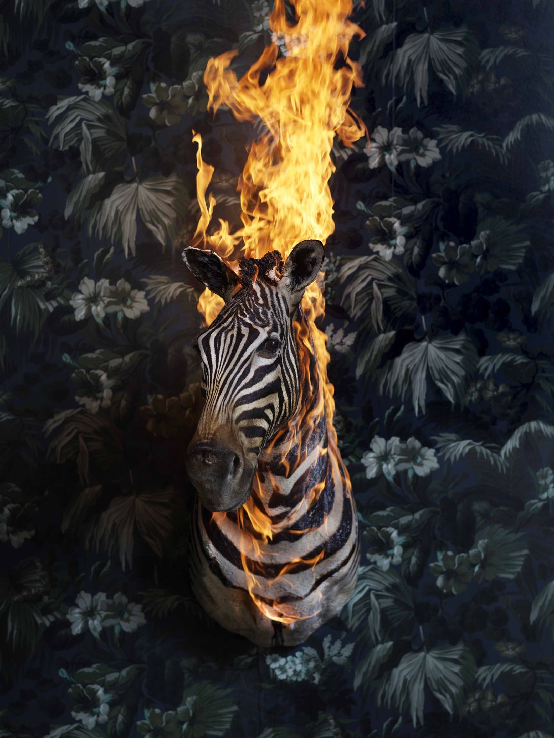 VIEWINGROOM #9 - CHRISTIAN HOUGE - 'A Norwegian artist and nature lover sets old trophy animals on fire and gives them a last breath of life before they are set free. His mission is to spark up a dialogue on our relationship to nature, and ultimately, to ourselves.'Christian Houges exhibition Residence of Impermanence at Fotografiska is beautiful and thought provoking.LEARN MORE