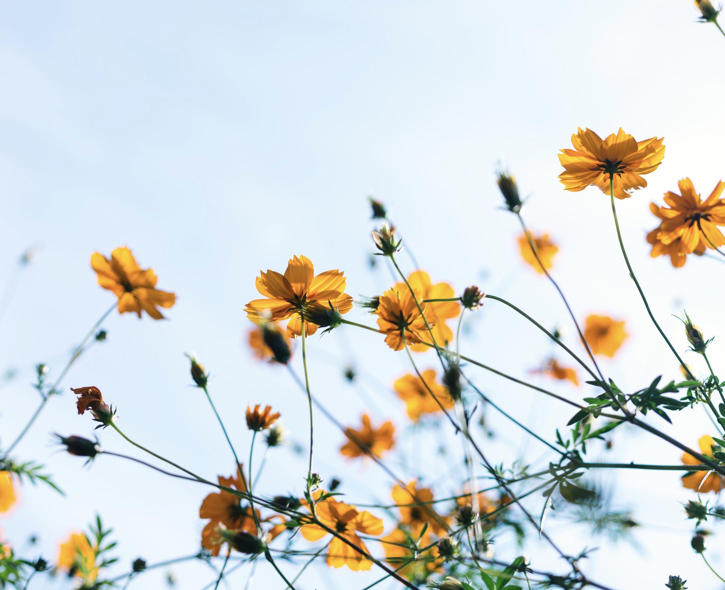 Spring flowers .jpg