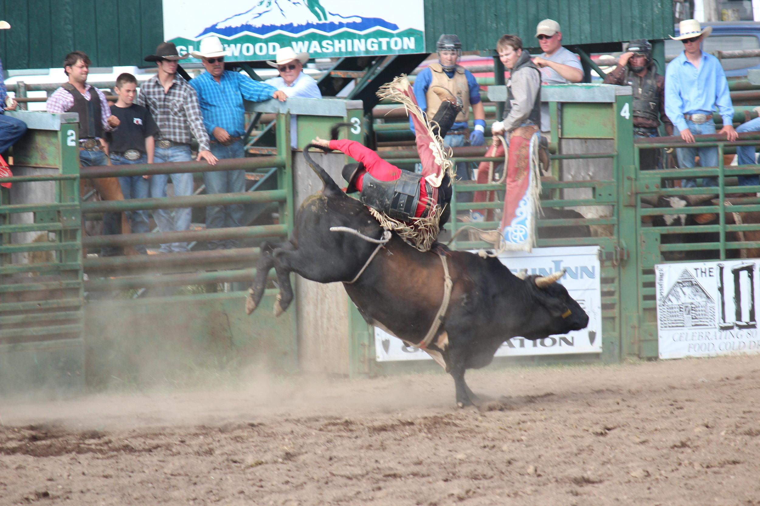 Bull Riding 2IMG_0737.jpg