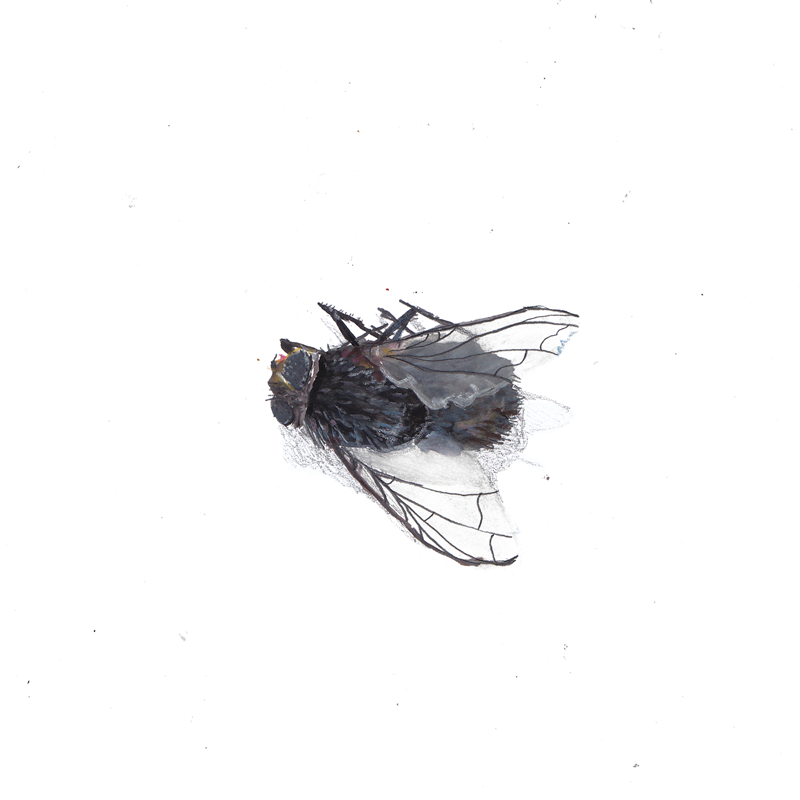 dead-fly.png