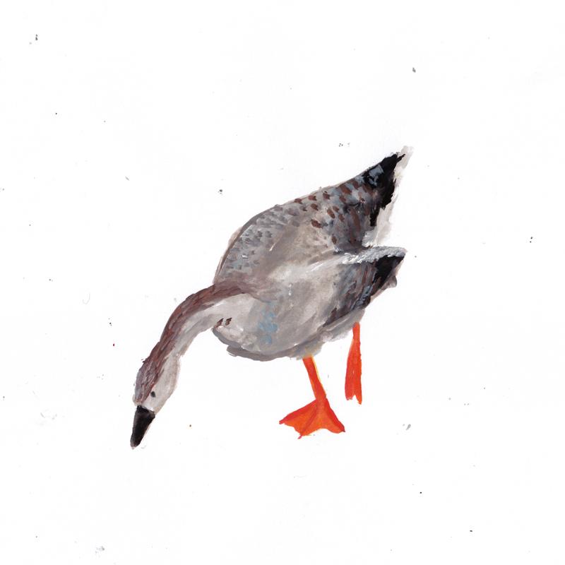 brown_baby-goose.png